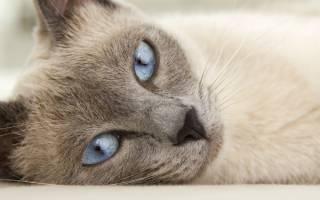 Воспаление лимфоузлов у кошек: причины и формы недуга