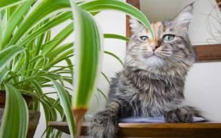 Кошка ест комнатные растения. Что делать?