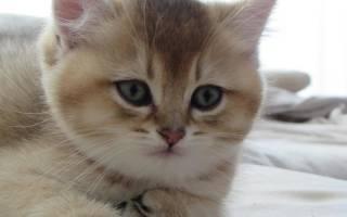 Почему у кошек глисты и как предотвратить их появление