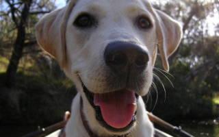 Почему у собаки выпадают зубы