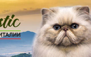 Как отмыть сальный хвост у кота