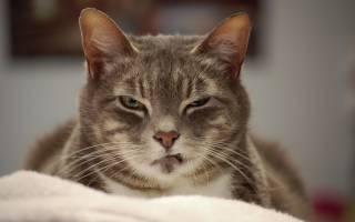 Понос у кота после кастрации: причины, лечение