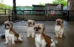 Панкреатит у собак: выявляем причины и садимся на диету