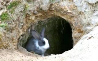 Содержание кроликов в яме: плюсы и минусы