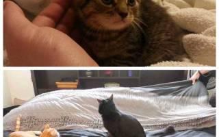 Действия, как отучить кота гадить на кровать