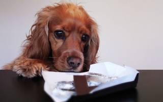 Можно ли собакам сладкое? Секреты здорового питания