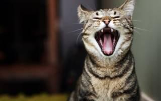 Почему коты мяукают по ночам