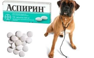 Можно ли давать собаке аспирин