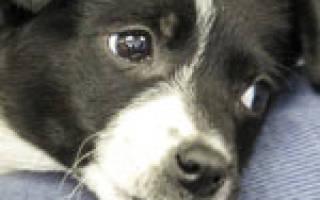 Как отучить собаку или щенка скулить: простые способы