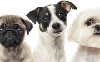Что делать если ваш щенок боится других собак: советы и рекомендации