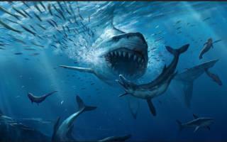 Где живет самая большая хищная рыба Земли