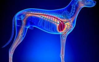 Легочная недостаточность у собак — сигнал о серьезном заболевании