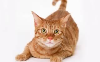 Поможем выбрать имя кошке: научный подход к проблеме