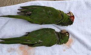 Умер попугай: почему это случилось и что делать