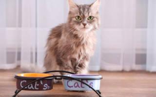 Что делать если кошка или кот ничего не ест?