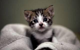 Кошка икает: как отличить патологию от нормы