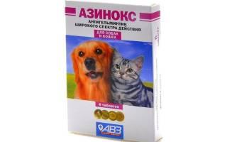 Азинокс для кошек: обзор препарата