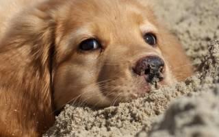 У собаки выпадают усы: основные причины недуга