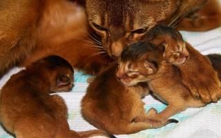 Схватки у кошки: признаки, продолжительность и общие сведения