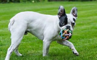 Купирование ушей и хвоста у собак