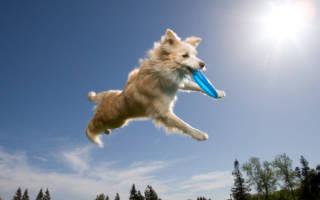 Учим свою собаку трюкам: 7 интересных фокусов