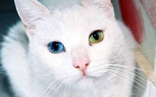 Травма глаза у кошки: симптомы, диагностика и лечение