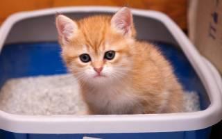 Чем вызван понос у котенка в 4 месяца