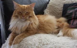 Болезни пожилых кошек и котов