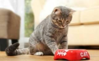 Кошка не ест после стерилизации: основные причины голодания