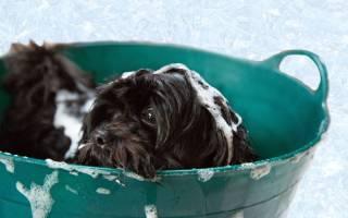 Как помыть собаку — правила и средства гигиены