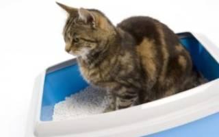 Кот или кошка не может помочиться: о чем это говорит