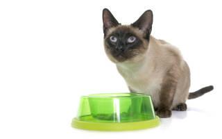 Что едят сиамские коты