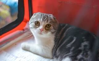 О чем сигнализируют выделения у кошки