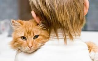 Можно ли заразиться лишаем от кошки человеку