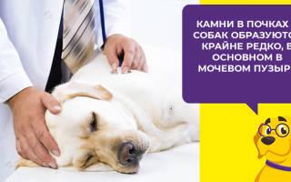 Кантарен для собак — показания к применению и побочные эффекты