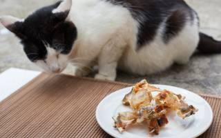 У кота тухлым пахнет изо рта: причины, рекомендации