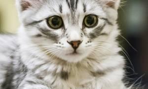 Лечение грыжи у котенка на животе: рекомендации ветеринаров