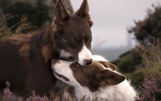 Собака прижимает уши: разбираемся в поведении питомца