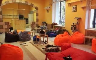 Кафе с кошками в Москве и Санкт-Петербурге: адреса