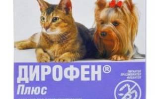 Кашель у кошек при глистах – клинический признак паразитарного заболевания