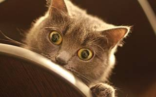 Почему кошка не спит ночью?