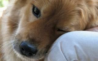 6 признаков неизбежного. Поговорим о том, как собаки ведут себя перед смертью