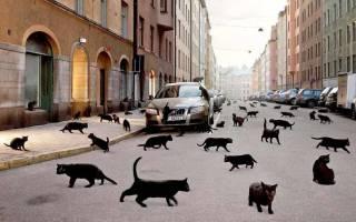Приметы про кошек, а также суеверия
